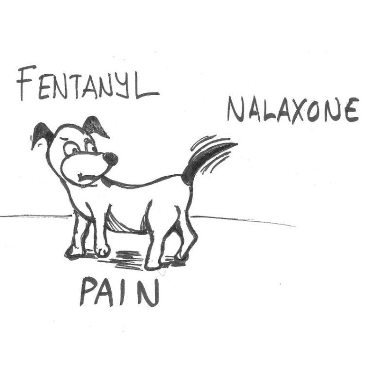 Pain Theory 101
